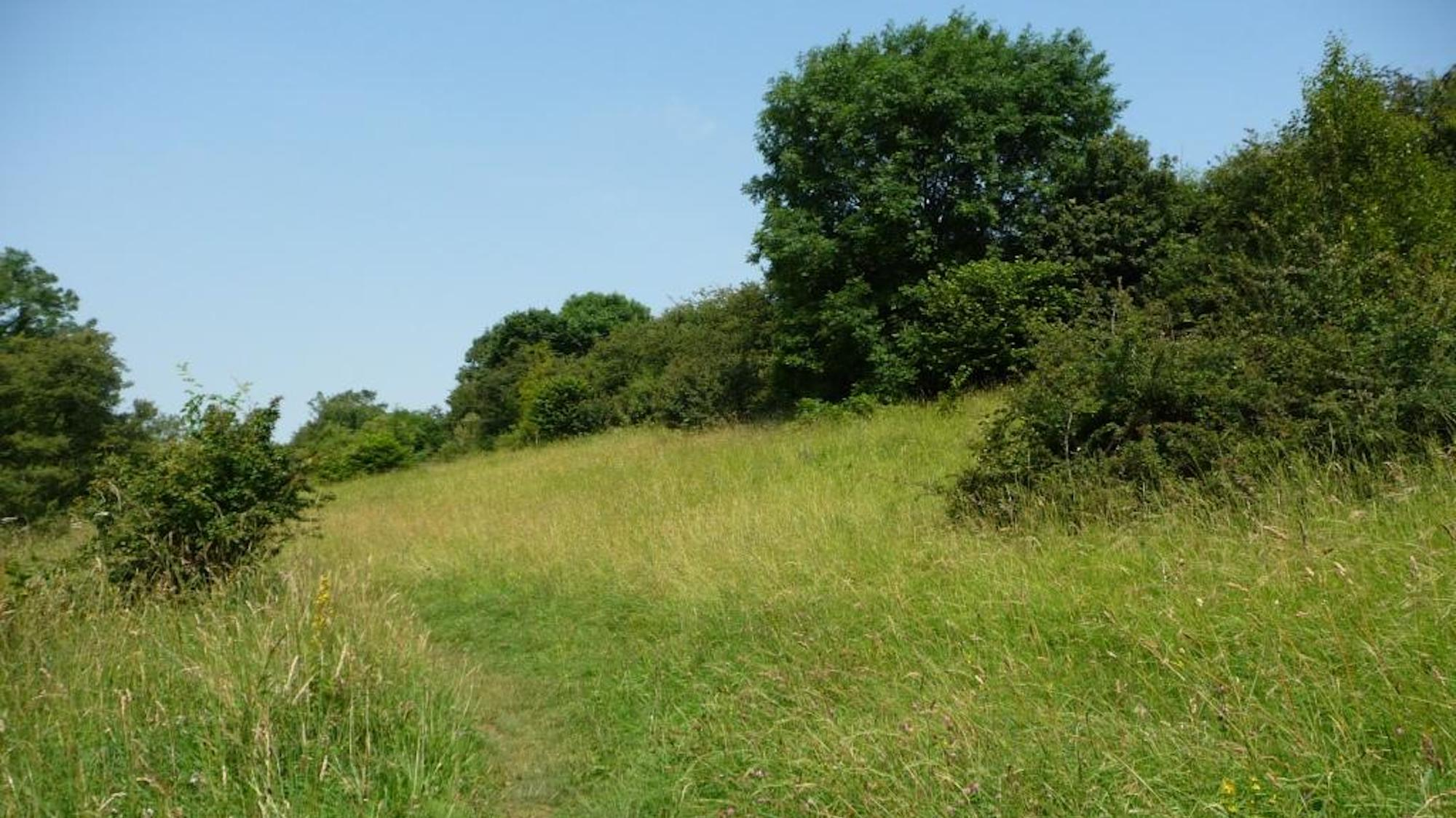 Hetchell Wood Nature Reserve