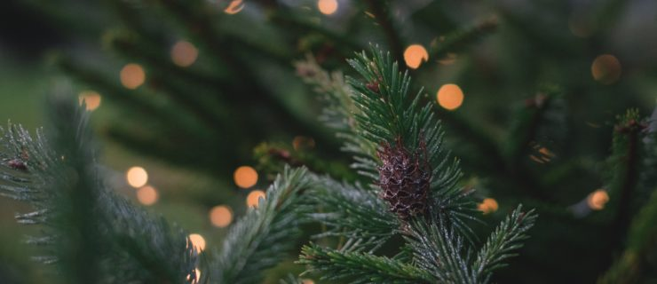 Where to Buy a Real Christmas Tree in Leeds