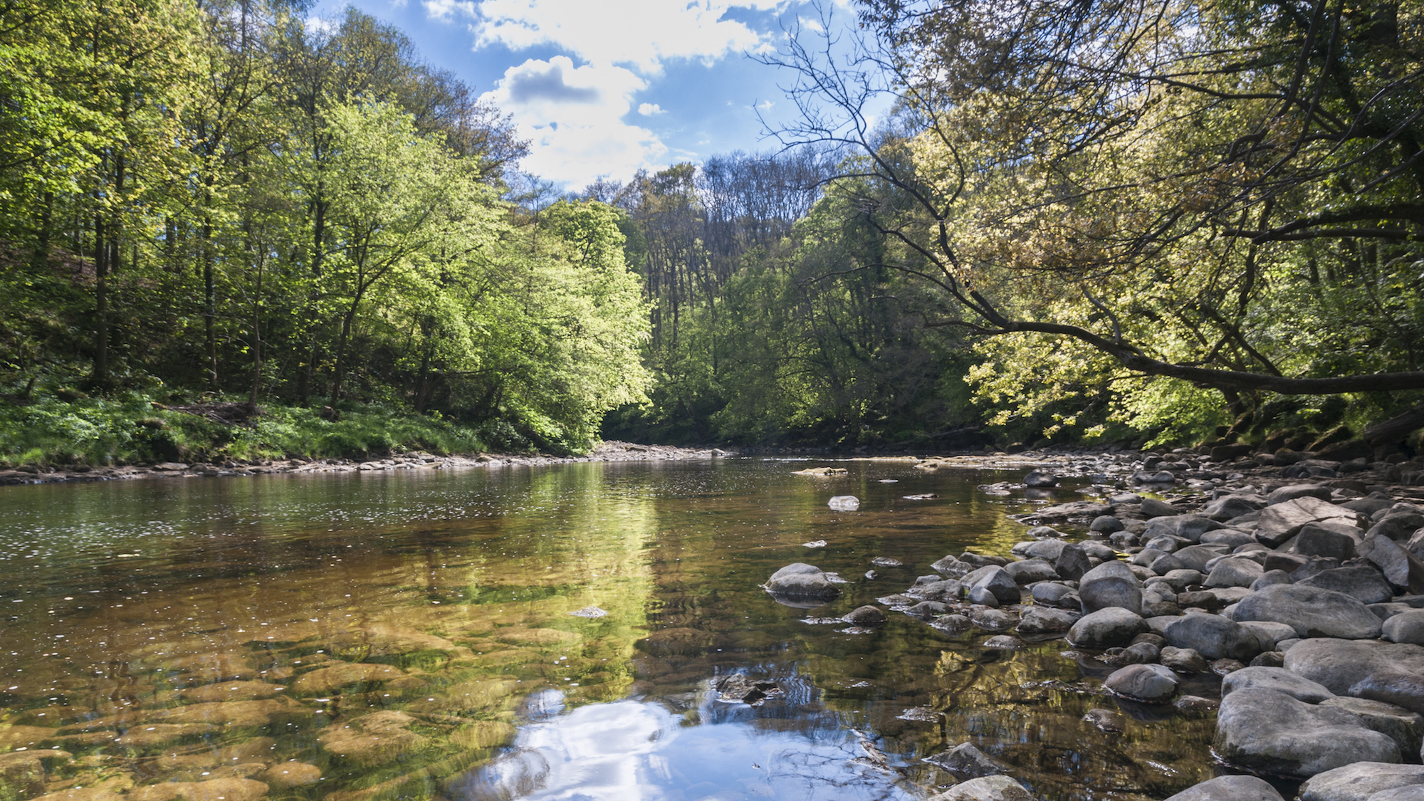 River Ure at Grewelthorpe flowing through Hackfall Wood, North Yorkshire, England