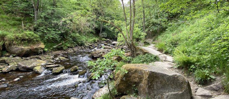 The Best Woodland Walks in West Yorkshire