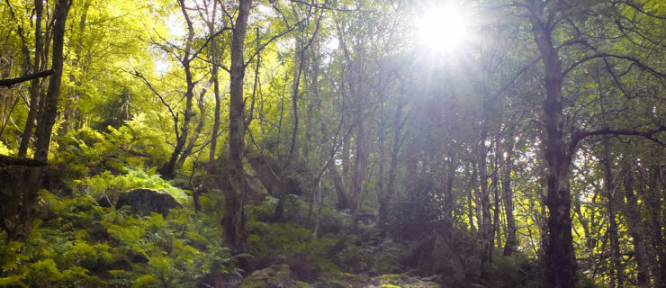 21 Glorious Leeds Woodlands On Your Doorstep