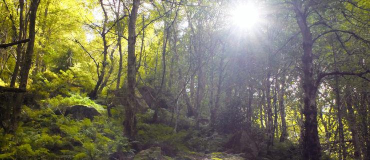21 Glorious Leeds Woodlands On Your Doorstep