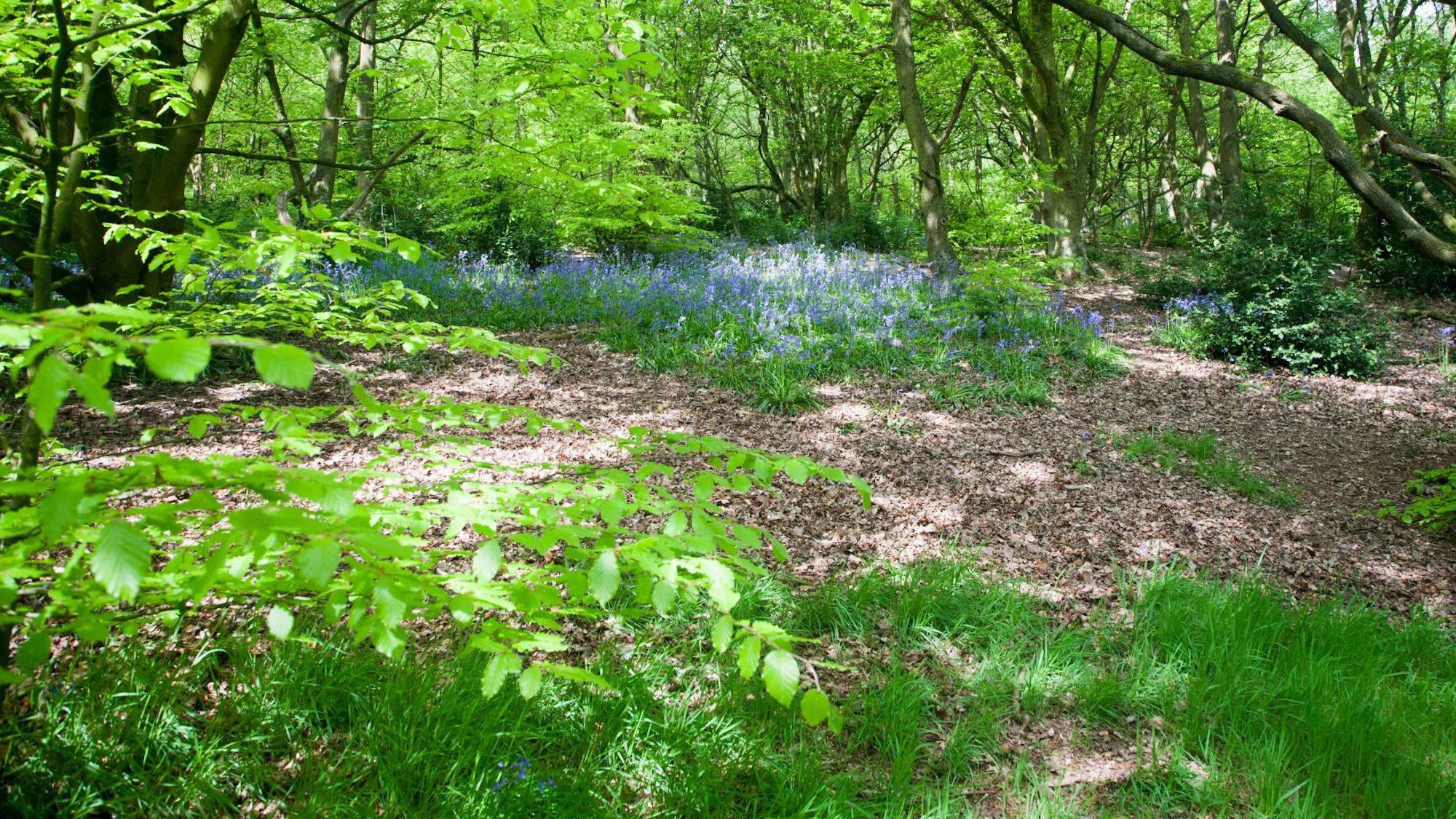 Hunger Hills Forest Walk