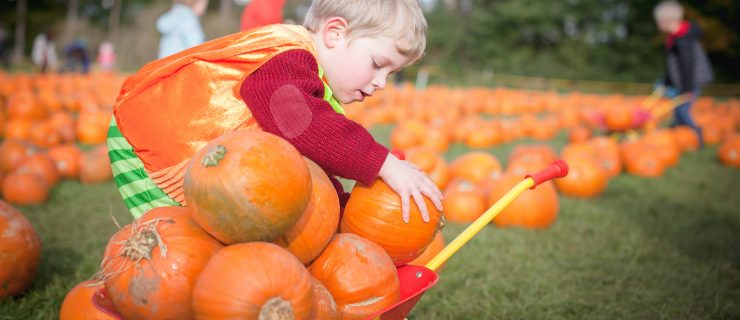Where to Go Pumpkin Picking in Leeds & Yorkshire