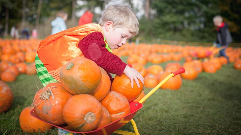 Stockeld Park Halloween Pumpkin Picking