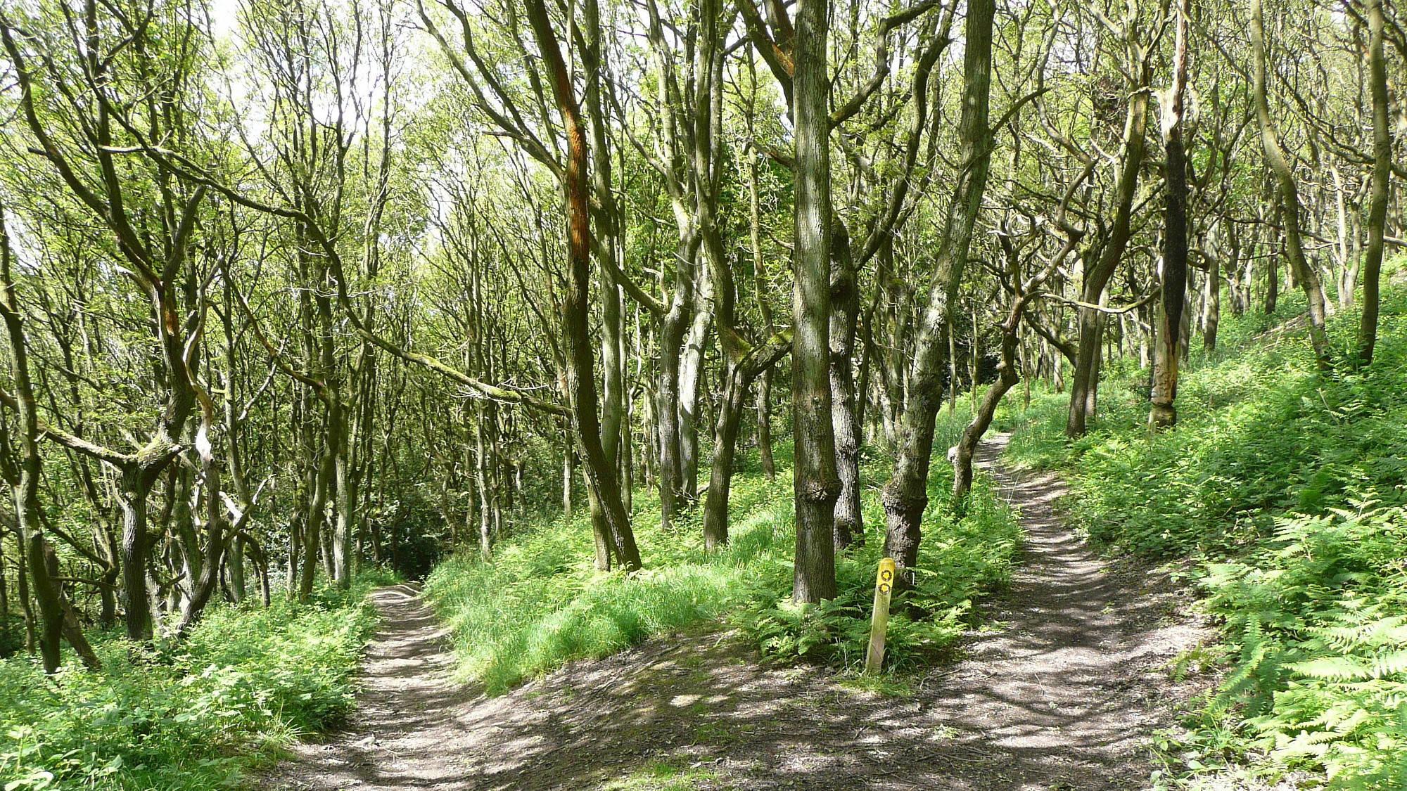 Elland Park Wood